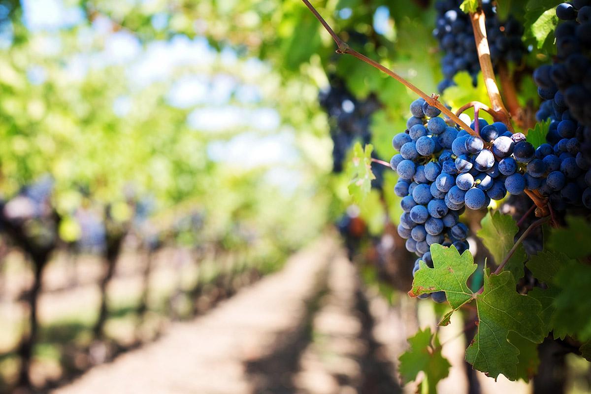 Armação de Pêra wijnproeverij